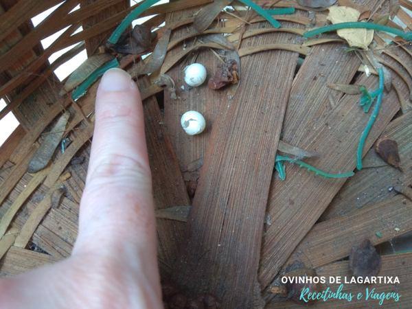 ovos de lagartixa