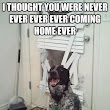 Lovable Furry Friends: Top 20 Funniest Dog Memes To Lighten Your Day
