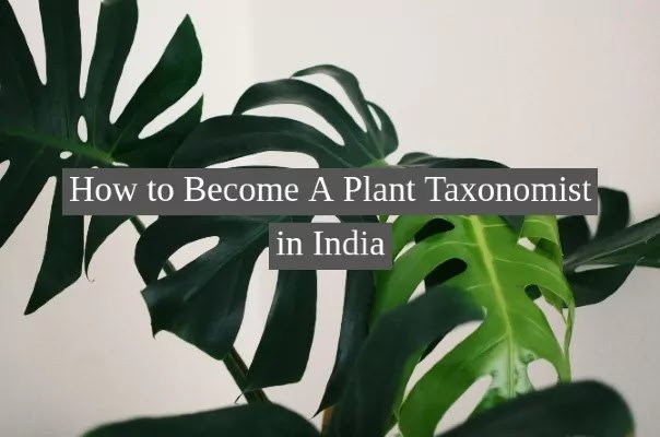 How to Become A Plant Taxonomist in India