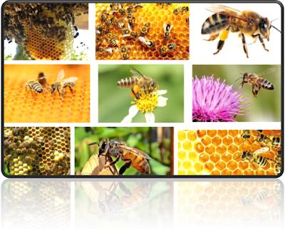 keuntungan beternak lebah madu