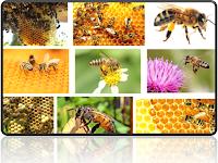 Keuntungan Beternak Lebah
