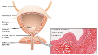 urinary tract infection causes symptoms and treatment