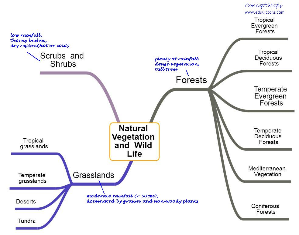 Gcse environmental mind map on wildlife resources, created by 08sltebbutt on 10/05/2013. Cbse Papers Questions Answers Mcq Cbse Class 7 Geography Natural Vegetation And Wild Life
