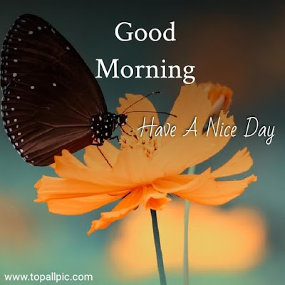good morning images with flower for whatsapp images