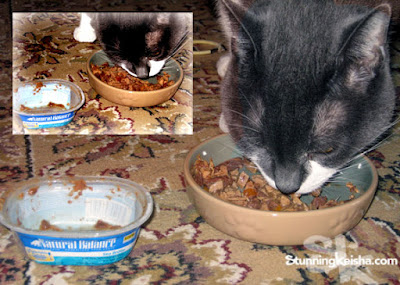 Cats with senistive tummies eat Natural Balance and I'll tell you why.
