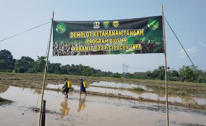 Koramil 0227/Cipocok Jaya Uji Coba Bios-44 di Lahan Seluas 4 Hektar