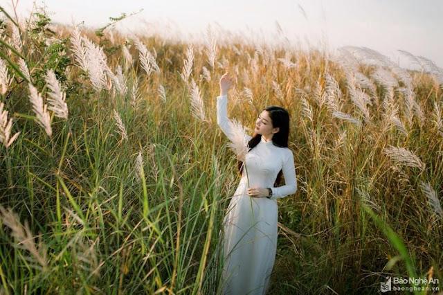 Choáng ngợp với vẻ đẹp 'tinh khiết' của đồng cỏ lau bên bãi bồi sông Lam - Nghệ An