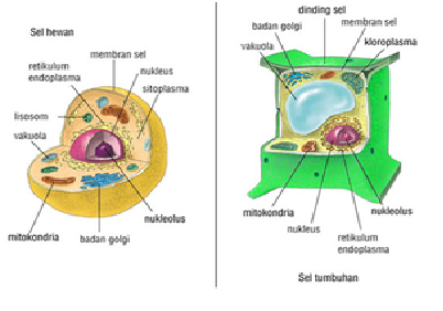 Bionomipa: Indikator 13: Fungsi Organel Sel pada Tumbuhan ...