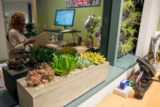 Succulents In The Office