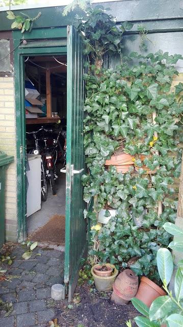 Merelnest op de lege bloempotten naast de garage in onze achtertuin.