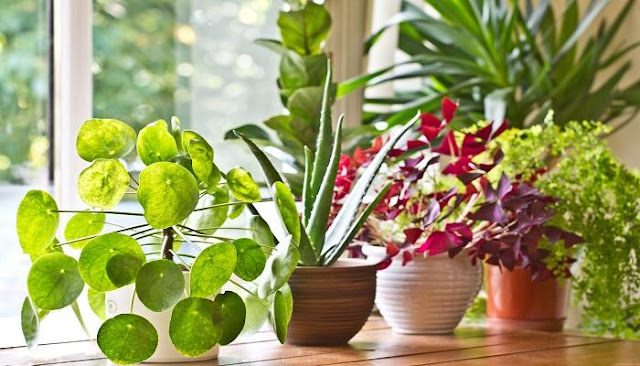 افضل النباتات المنزلية التي يمكن زراعتها في قوارير