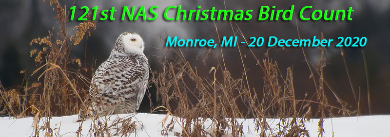 121st NAS Christmas Bird Count-Monroe, 20 Dec 2020