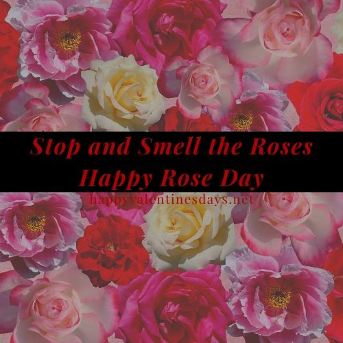 rose-day-images-hd