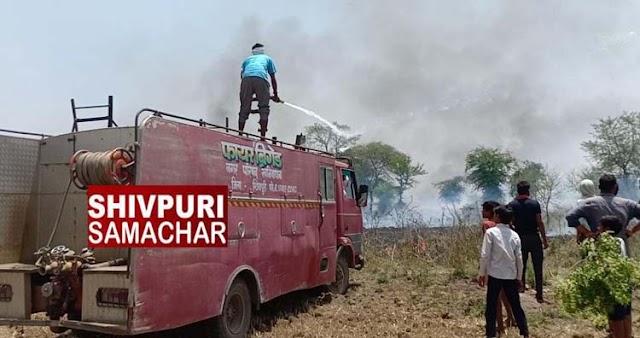 खेतों में लगी आग, आधा दर्ज भैंस जिंदा जल गई, डेढ दर्जन झुलसी | khaniyadhana, SHIVPURI NEWS