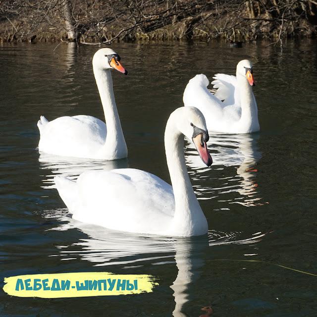 Лебедь. Симферополь, Гагаринский парк