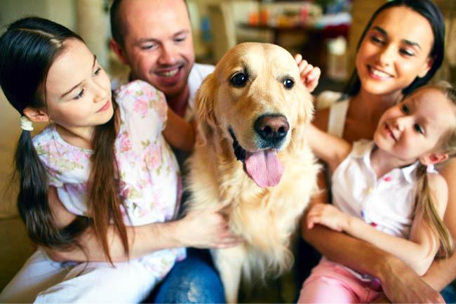 Jak mówić do psa żeby nas słuchał?