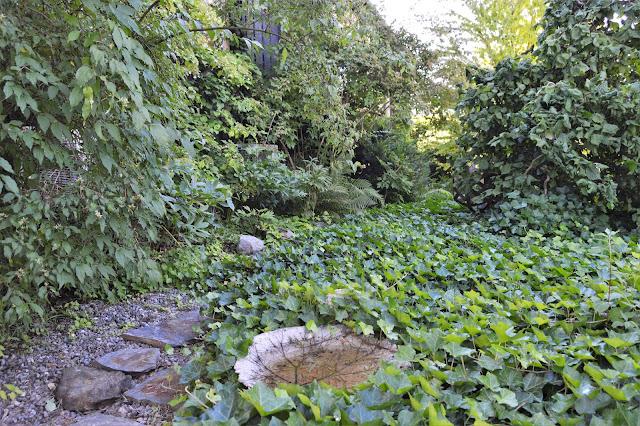 Se en hage i harmoni med seg selv - Eføy som bunndekker. Furulunden