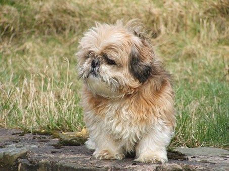 dog breeders in mangalore