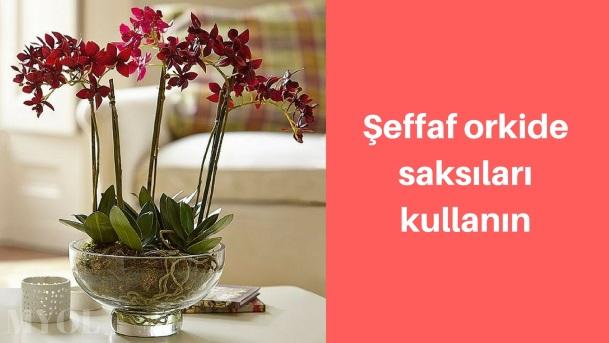 Orkide saksı değişiminde şeffaf saksı