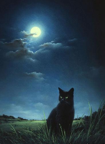 gatto di notte