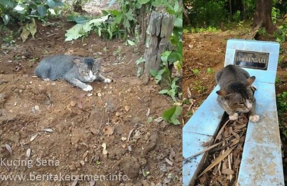 Setia Menunggu Makam Tuannya, Kucing di Kebumen ini 'Mendunia'