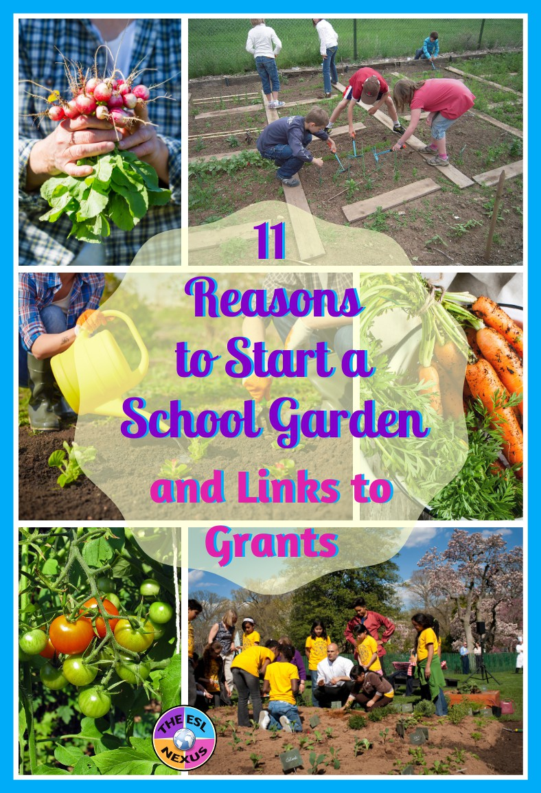 11 reasons you should plant a school garden, with links to info on how to start one and where to obtain funding for a school garden   The ESL Nexus