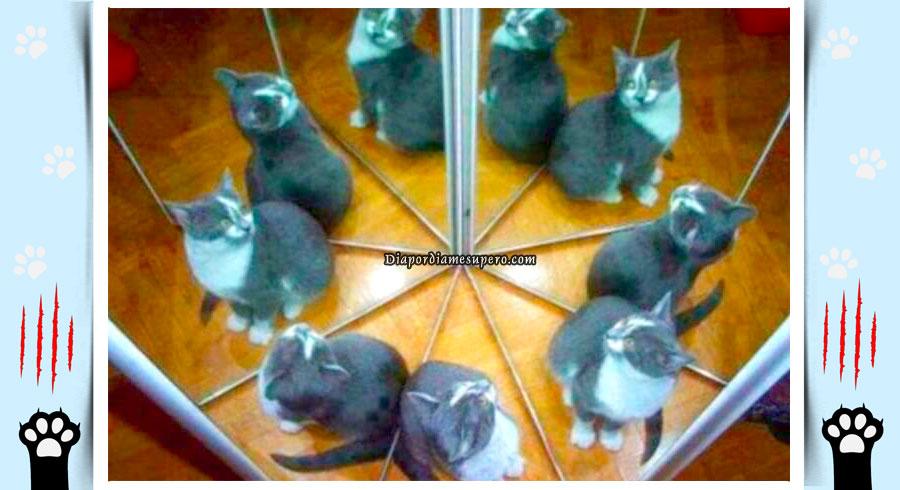 Test personalidad:¿Cuántos gatos ves?