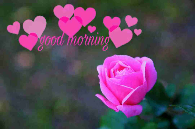 Awesome good morning image with pink rose flowers have a good day