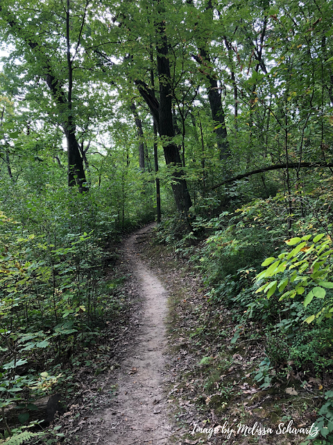 The natural trail curves and folds into the lush forest.