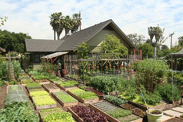 Rachel the Gardener: Permaculture, Forest Gardening, Square Foot Gardens