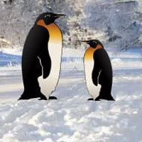Wow Penguin Snow Land Esc…