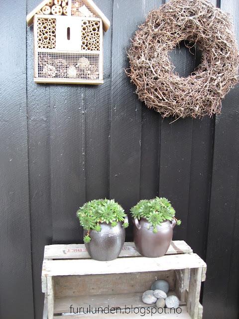 Inspirasjon til høstplanter i krukker - del 5. Takløk ute på terrassen i Furulunden