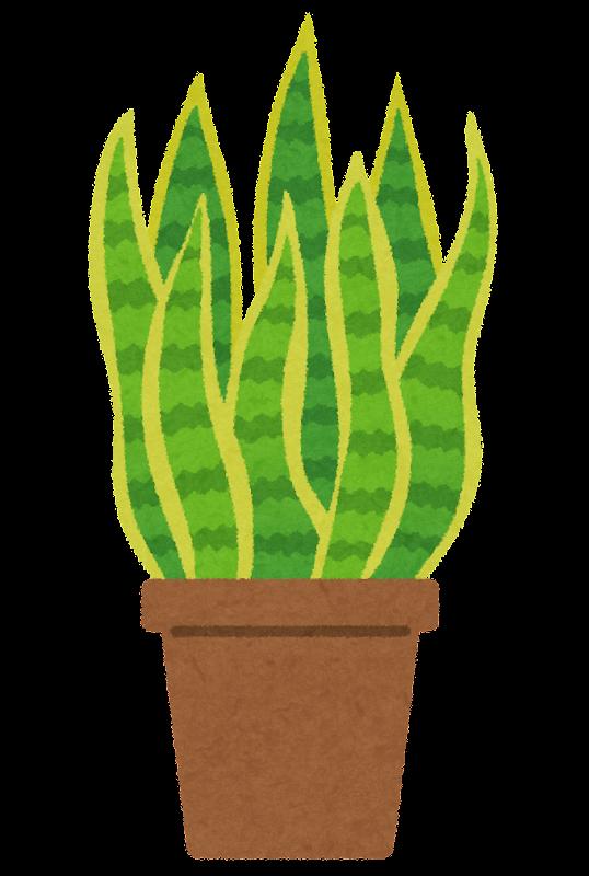 サンスベリアのイラスト観葉植物 かわいいフリー素材集 いらすとや