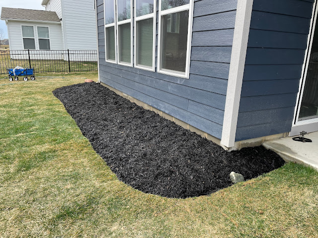 black mulch in new landscaping bed