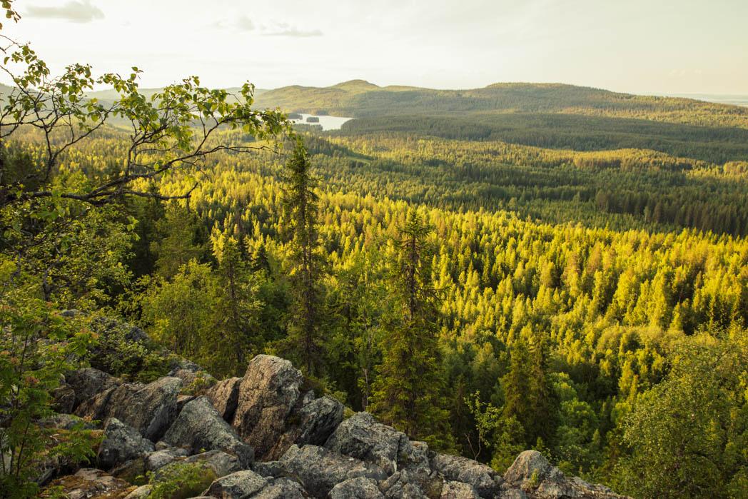 Kolin kansallispuiston avarat näkymät Ryläyksen kodalta.