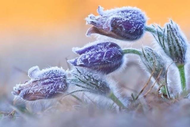 В Україну повернулися морози до -15: де синоптики прогнозують похолодання