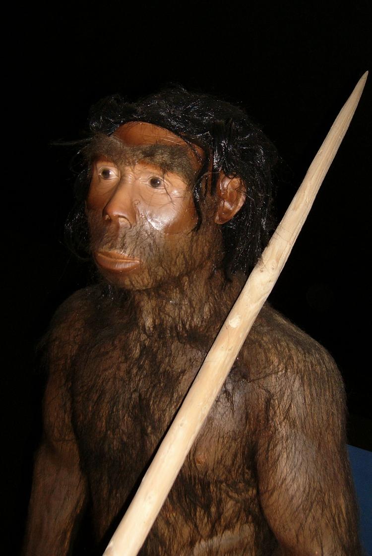 all information you can get easily Sejarah Manusia Purba