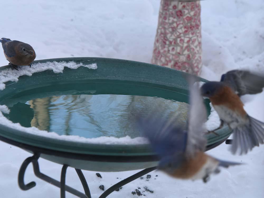 Bluebird hot tub party