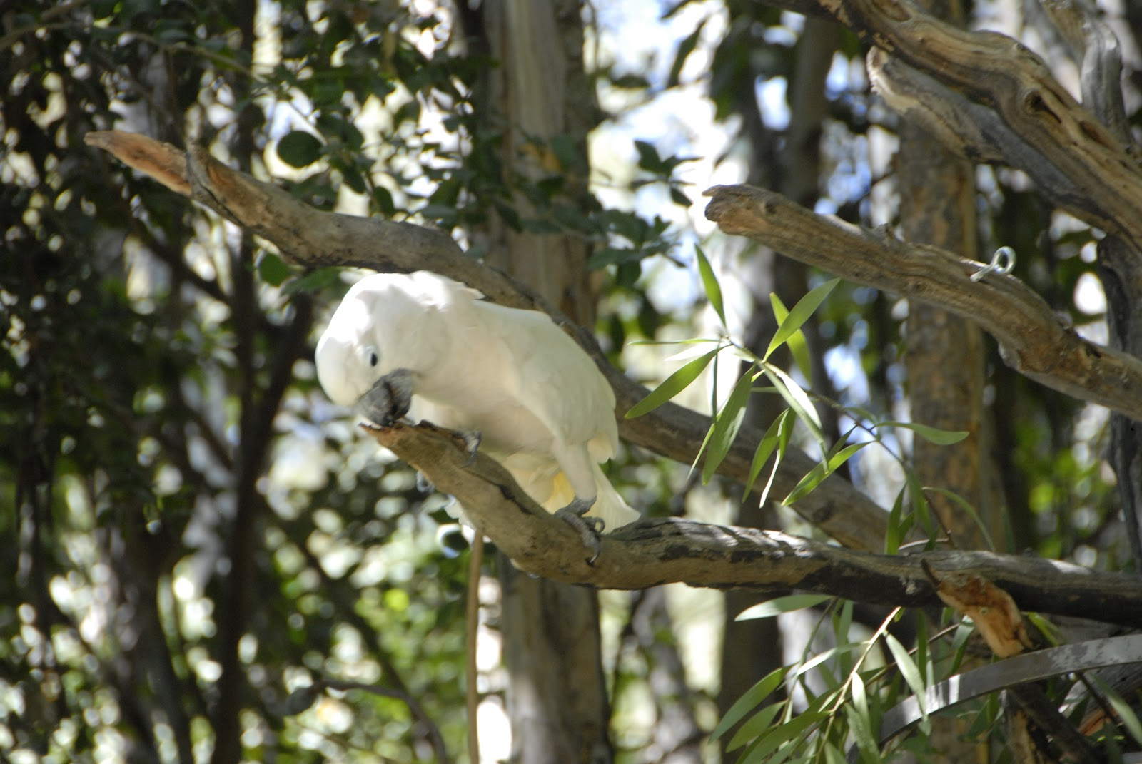 White Parrot at the San Diego Safari Park: LadyD Books