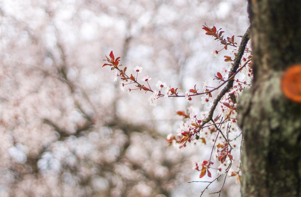 primavera zaragoza fotografía flores