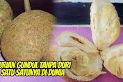 Heboh, Durian Gundul Dari Kaki Rinjani