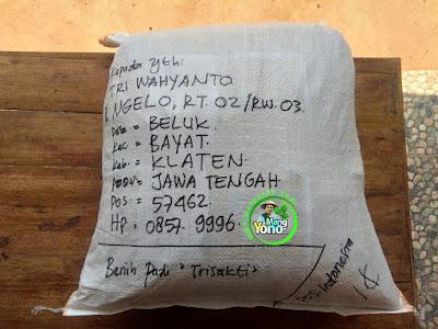 Benih pesana    TRI WAHYANTO Klaten, Jateng.   (Sesudah Packing)