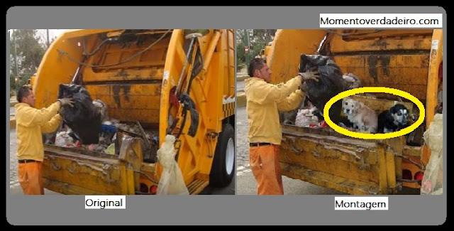 Lixeiros estariam jogando cães ainda vivos nos caminhões de lixo