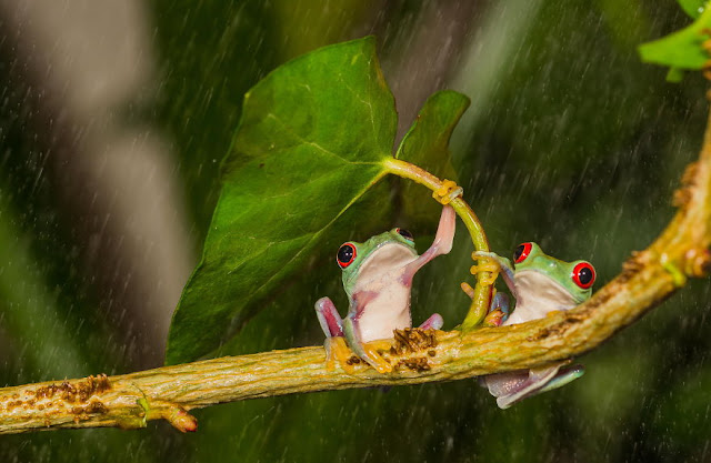 Animals With Natural Umbrellas. Creatures + rain = umbrella