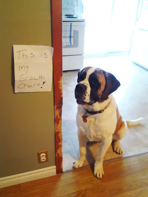 ''Dogs Being Shamed'' this is my growth chart