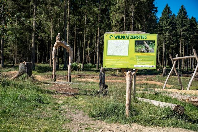 Wildkatzen-Walderlebnis und Wildkatzenstieg zum Wildkatzengehege Bad Harzburg 08