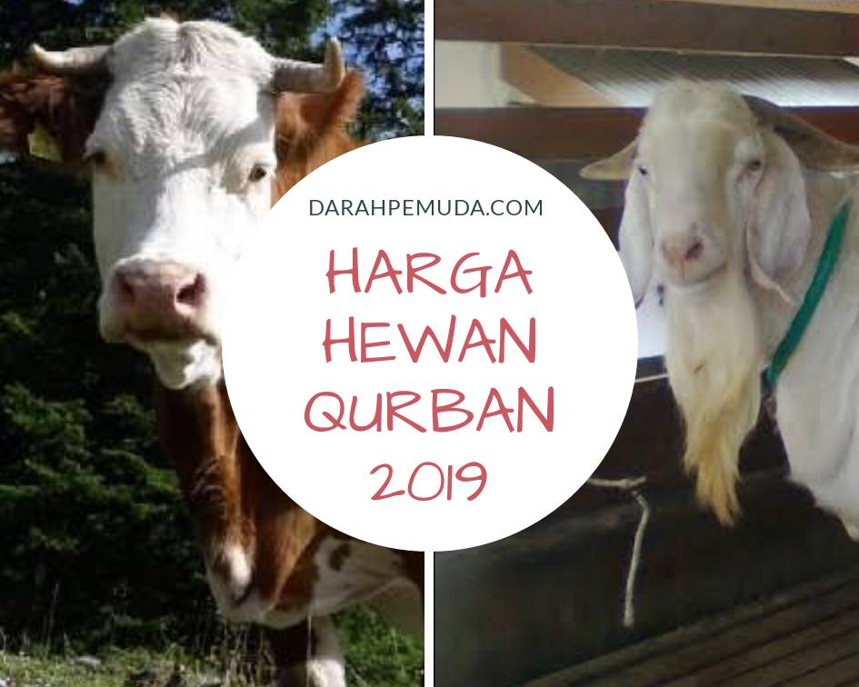 62 Gambar Hewan Qurban 2019 HD