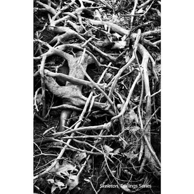 Skeleton - Trailings Series - Sara Harley