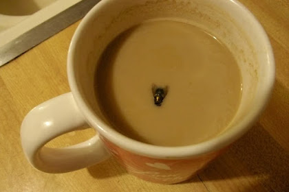 Yang harus kita lakukan jika ada lalat masuk ke minuman