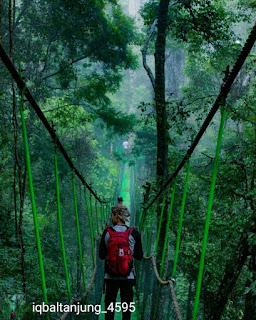 Canopy trail Taman Nasional Gunung Leuser North Sumatra, Indonesia